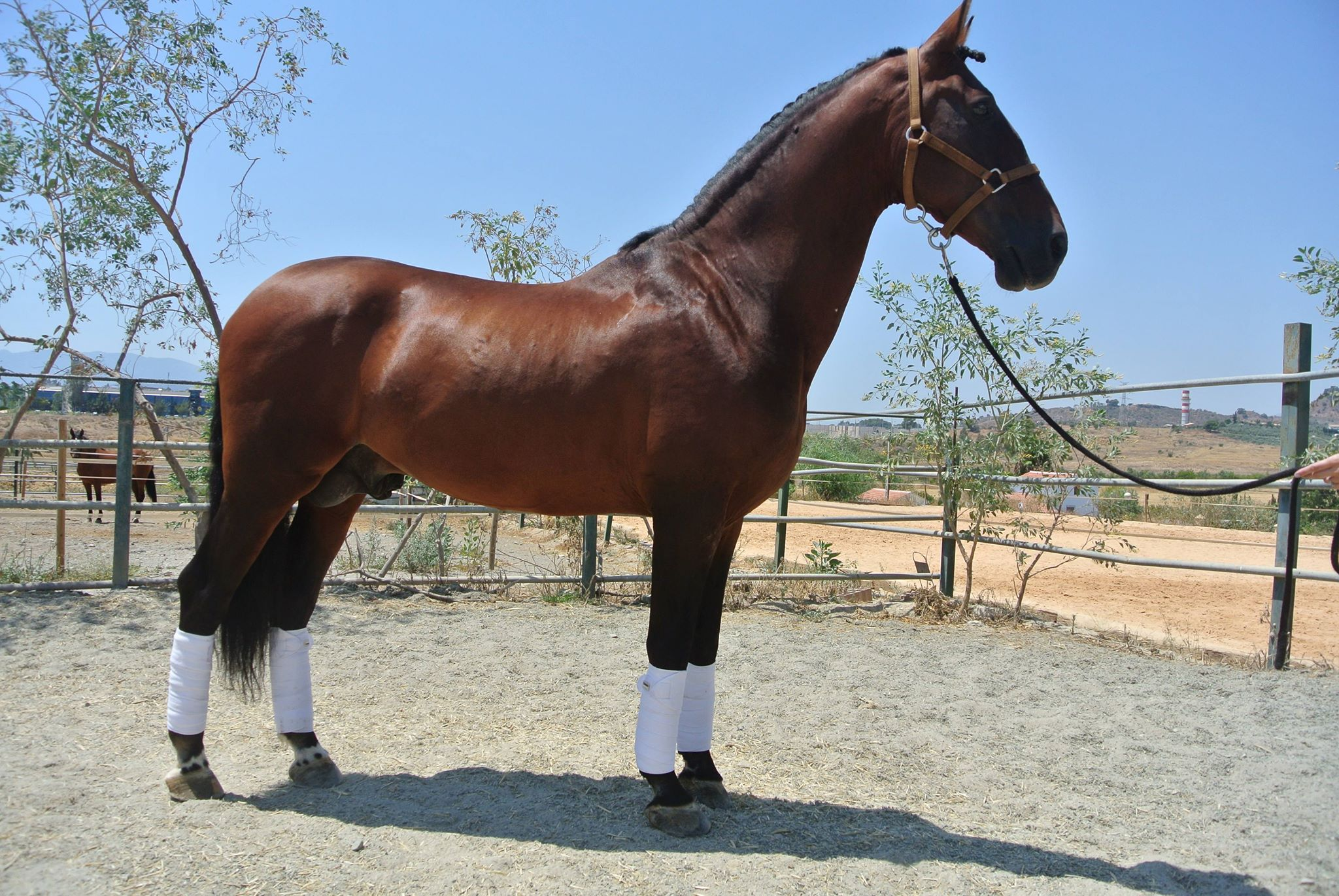 Horses for SALE by Gold Buckle Barrel Horses
